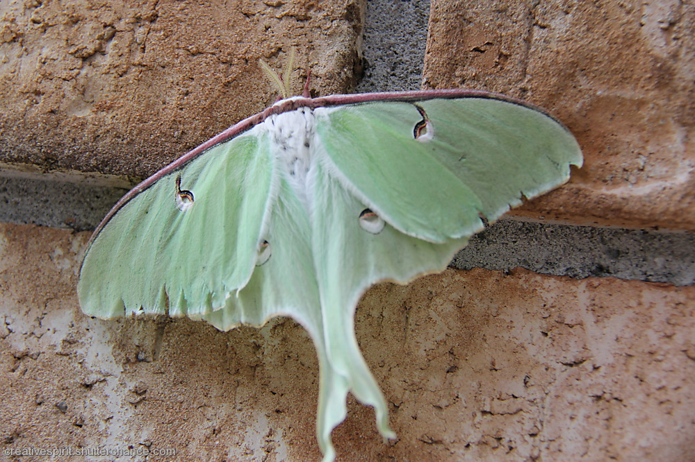 photoblog image Beautiful Moth!!